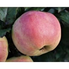 Mormors äpple