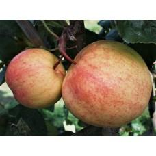 Moskvas päronäpple