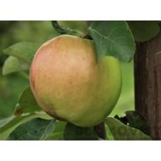 Ottos äpple