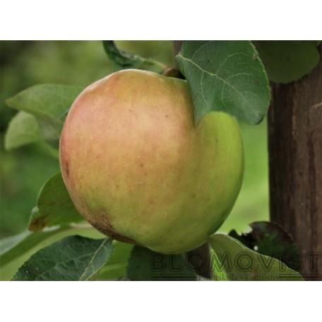 Ottos äpple  I-V