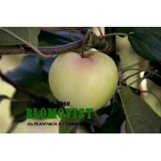 Sommargylling Virginskt rosenäpple (Vitgylling)  I-III(IV)