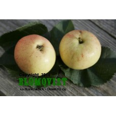 Lepas melon B118   I-V(VI)