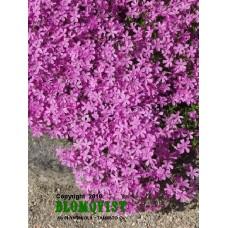 Mossflox